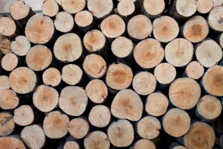 sawed: Background from the sawed pine firewood