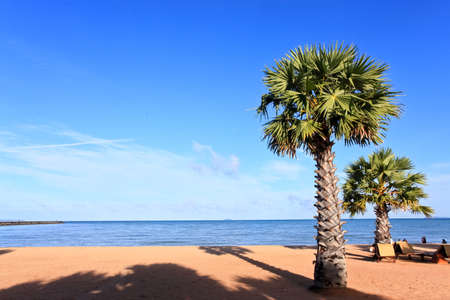 in the morning beach and sigle Coconut plan with  blue sky Stock Photo - 8094126