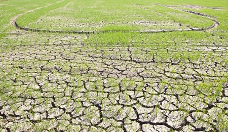 soil pollution: died and cracked soil