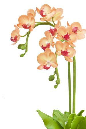 Artificial orchid on white background Stock Photo - 8871472