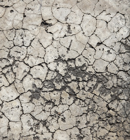 damaged cement: Cracked crement texture
