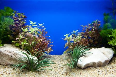 peces de acuario: Acuario de planta Foto de archivo