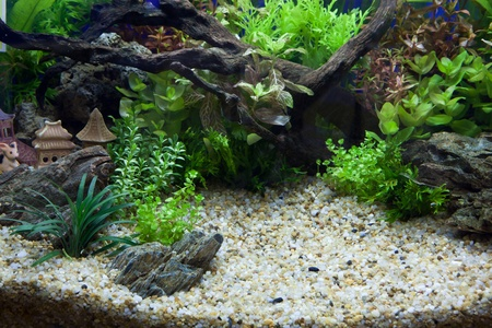 buntbarsch: Pflanze-aquarium Lizenzfreie Bilder
