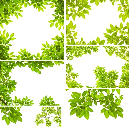 Green leave on white background photo