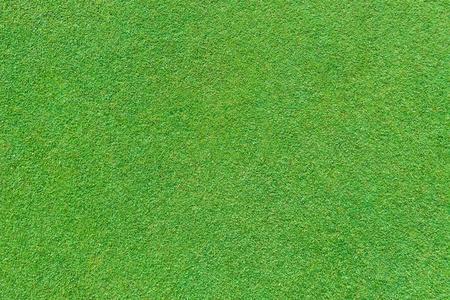 grass land: Real green grass background