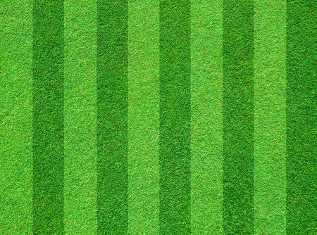 turf: Real green grass field background