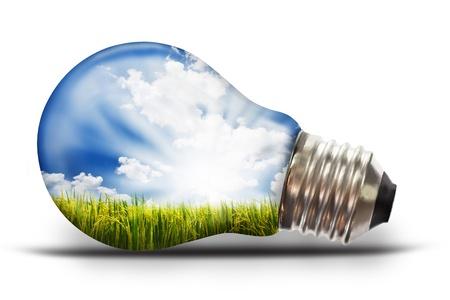 ahorro energia: bombilla de luz con el arroz con c�scara