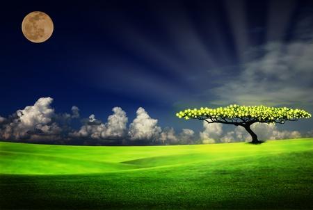 alone tree on grass field photo