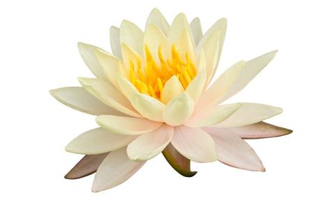 lotus Stock Photo - 9884409