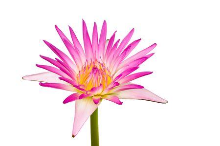 lotus Stock Photo - 9884404