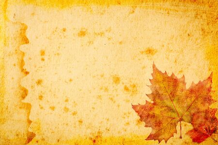 maple leaves grunge paper for background photo