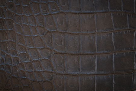 slither: Crocodile leather texture Stock Photo