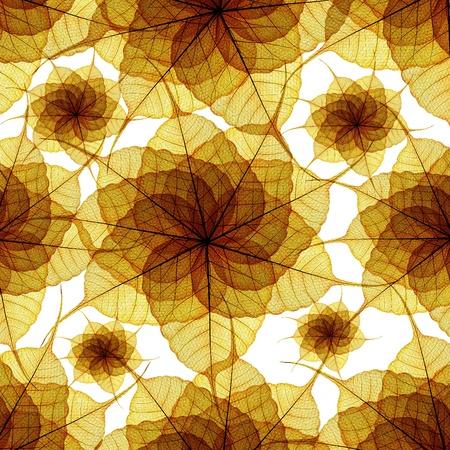 seamless skeleton leaf background photo