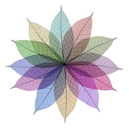Skeleton leaf abstract Foto de archivo