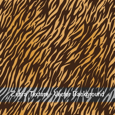 draw animal: Vector- Zebra texture background