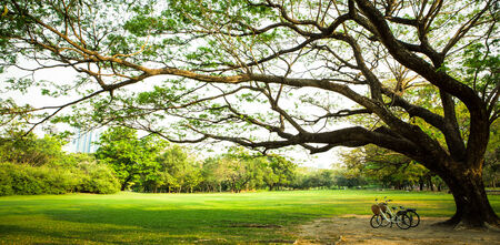 under tree: bicycle on green grass under Big tree in the park