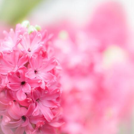 colorize: beautiful flowers , soft focus