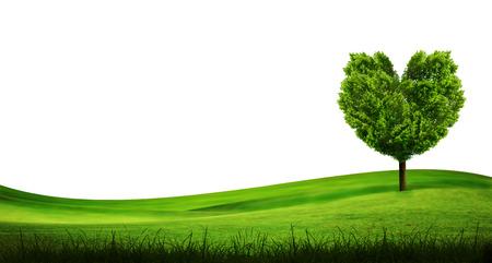 broad leaf: alone tree on grass field