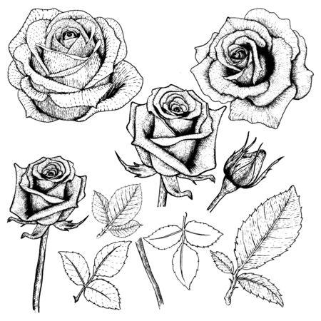 Ensemble de roses à dessin