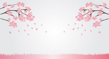 Natural background Pink cherry blossoms are blooming and blown away with the background breeze for text or display various advertisements - vector. Illusztráció