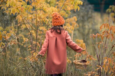 funy girl in a brown coat and an orange hat goes into the distance. yellow leaves on the bushes. horizontal photo of a child. back view. 스톡 콘텐츠