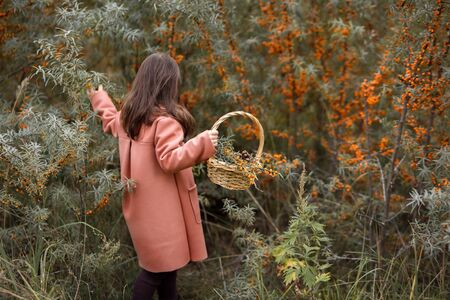 Cute little preschooler girl in a beautiful brown coat collects sea buckthorn berries in a wicker basket in the forest. horizontal photo of a child. back view Zdjęcie Seryjne