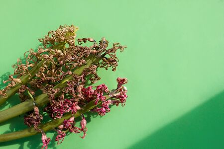 several dried twigs of pink, yellow hyacinth flower.