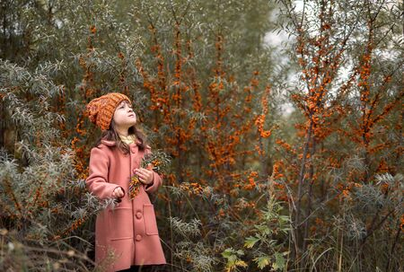 Warm horizontal autumn photo. preschooler girl in an orange hat and a brown coat holds branches of sea buckthorn and looks at the sky. in the background bushes with berries
