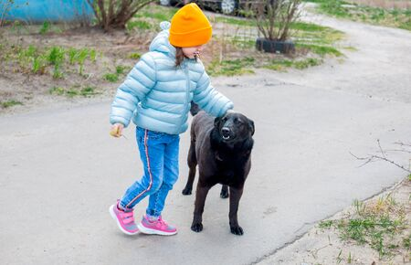 a little kid girl in a blue jacket and hat stroking the back of a black large stray dog in the yard. Foto de archivo