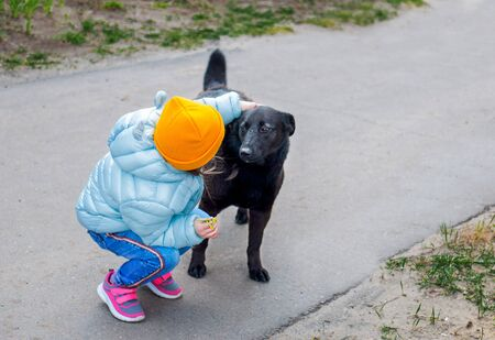 a little kid girl in a light blue jacket and hat stroking the back of a black large stray dog in the yard. Reklamní fotografie