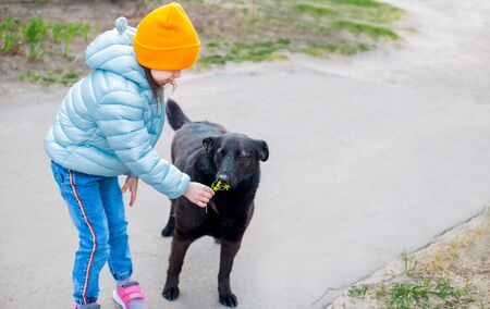 a little kid girl in a light blue jacket gave yellow flower to a black big dog in the yard to smell Foto de archivo