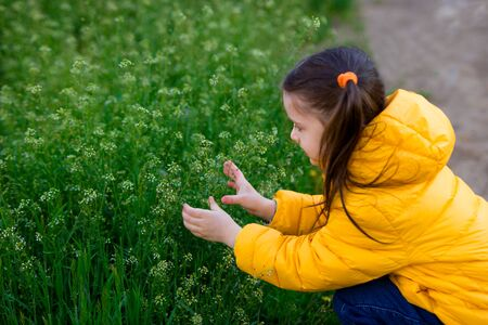 back view. girl child in a yellow jacket and jeans squatted and picks a grassy plant Capsella bursa pastoris.