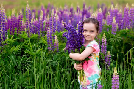 smiling kid girl holding a large bouquet of purple lupins in a flowering field