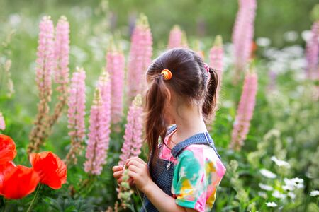 happy kid girl with ponytails in a denim overalls with shorts and a multi-colored t-shirt stands among a flower field. pink lupins, red poppies. back view.