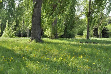 Path through the landscaped park in spring Stock Photo - 7432660