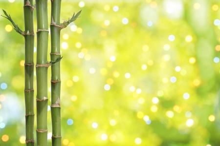 Bamboe komt voort op de twinkelende abstracte achtergrond