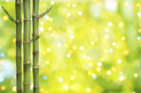 Bamboo stems on the twinkling abstract background photo