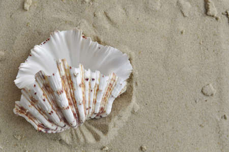 Beautifull seashell on sand background photo