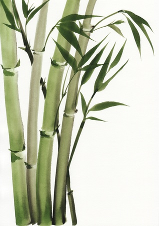 japones bambu: Arte original, pintura de la acuarela de la pintura de bambú, estilo asiático Foto de archivo