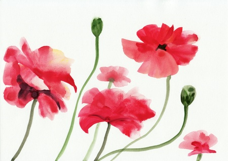 chinese watercolor: Original art, watercolor painting of red poppies