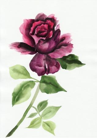 Watercolor rose original painting  asian style. Stock Photo