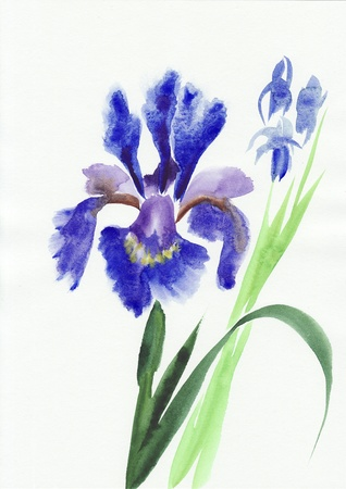 Blue iris flowers original watercolor painting photo