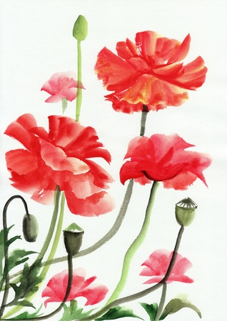 Original art, watercolor painting of red poppies photo