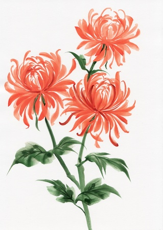 chrysanthemums: Watercolor painting of Chrysanthemum. Asian style. Stock Photo