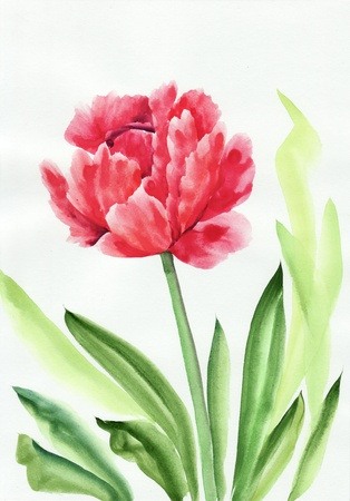 Watercolor painting of Tulip. Asian style.
