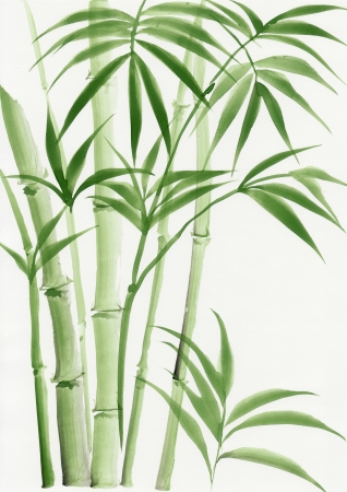 chinese watercolor: Original watercolor painting of palm bamboo