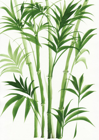 Original watercolor painting of palm bamboo  Banque d'images
