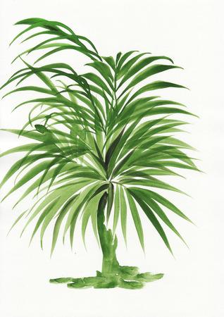 Original watercolor painting of palm bamboo Stock fotó - 23960482