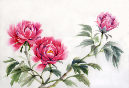 Aquarel schilderen van roze pioenrozen. Aziatische stijl.