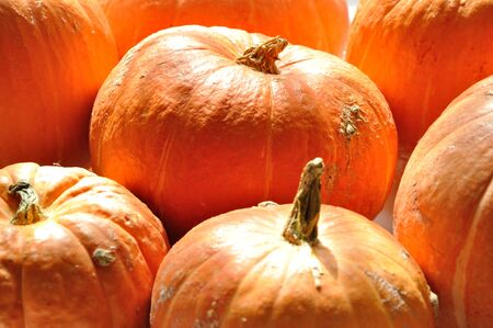 Background of ripe red pumpkins